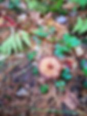 微信图片_20200204103638.jpg