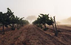 Notary Public- wineyard
