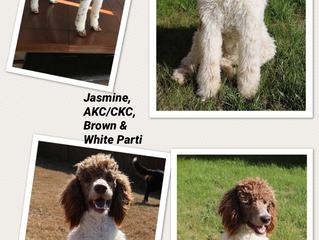 Jasmine x Ryder Coming Soon!