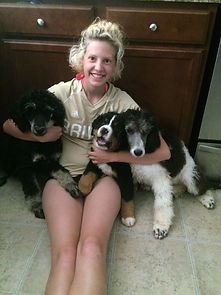 Brooke and poodles as well as bernese mountain dog