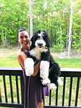 Previous Black and white f1 standard bernedoodle