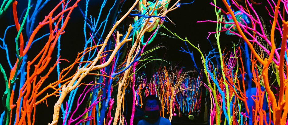 Is Meow Wolf Autism Friendly?