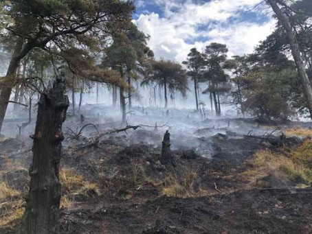 New protection order sought to reduce threat from wildfires