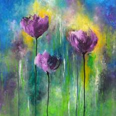 Purple Poppies