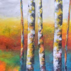 Birches in Sun