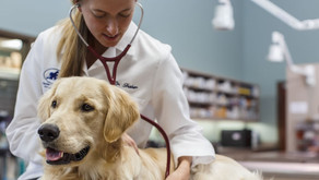 Veterinærmedicin: Sådan kommer du ind