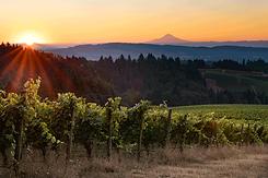 US_Sustainable_Winegrowing_Oregon.png