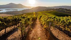US_Sustainable_Winegrowing_California.pn