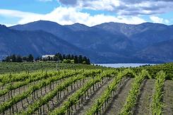 US_Sustainable_Winegrowing_Washington.pn
