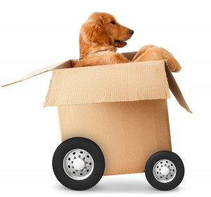dog-in-a-box-with-wheels-300x280.jpg