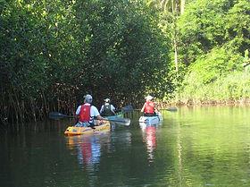 Kayak in Bejuco Guanacaste