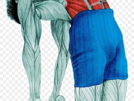 A anatomia do Hatha Yoga