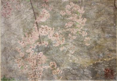 白川の桜, 祇園白川 Cherryblossoms at Gion Shirakawa
