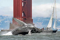 humpback whale bridge.jpg