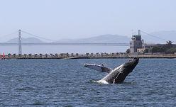 allie humpback.jpg