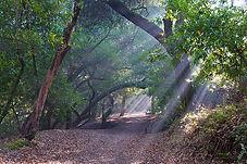 Contra Costa County briones 3.jpg