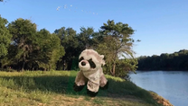 Rider Raccoon is ready to go!