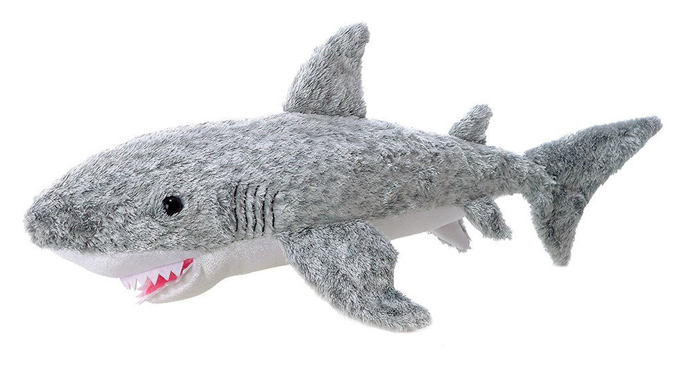 Fin the Shark