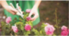 jardineria.JPG