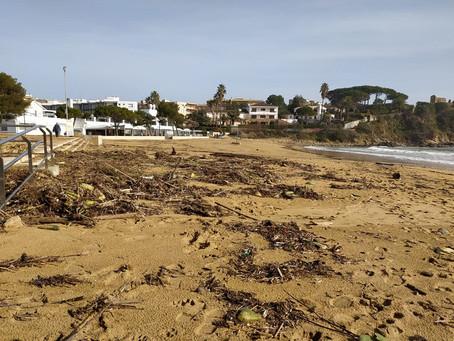Jornada de neteja del litoral Palamosí per retirar la brossa aportada pel temporal d'aquesta setmana