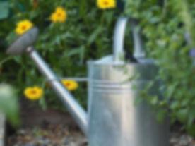 garden-2497476_960_720.jpg