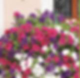 jardineria.PNG