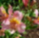 flowers-3596756_960_720.jpg