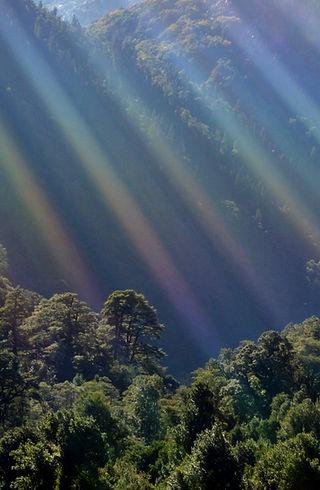 Bosque siempre verde, Camping, Trekking, Hostal B&B, Valle de Cochamó, inicio del sendero a La Junta, alojamiento, hospedaje
