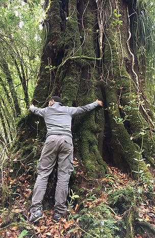 bosque, Camping, Trekking, Hostal B&B, Valle de Cochamó, inicio del sendero a La Junta, alojamiento, hospedaje