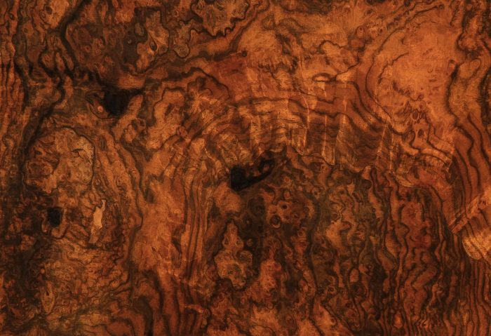 Burr Walnut Veneer
