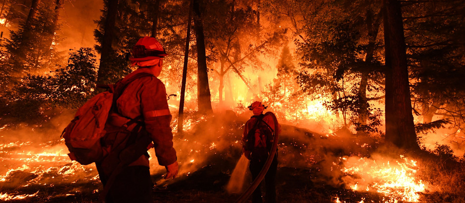 Has the Forest Service Been Making Wildfires Worse?