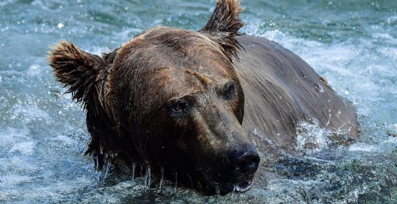 Mother bear and cub shot after climbing onto Russian nuclear submarine