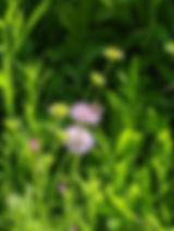 Blumenbienchen.jpg