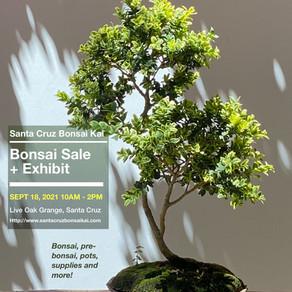 September Bonsai Sale + Exhibit