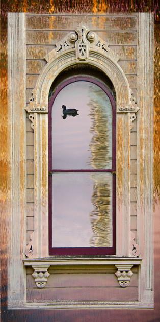 Duck PS window 2.jpg