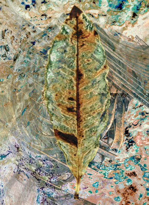 Leaves 754321.jpg