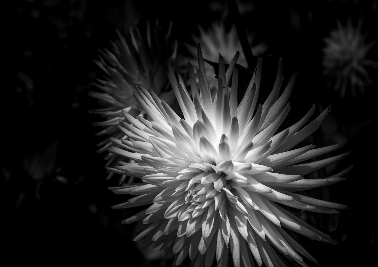 Botanical8.jpg