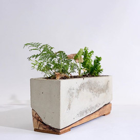 Designer Planters