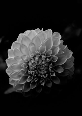 Botanical7.jpg