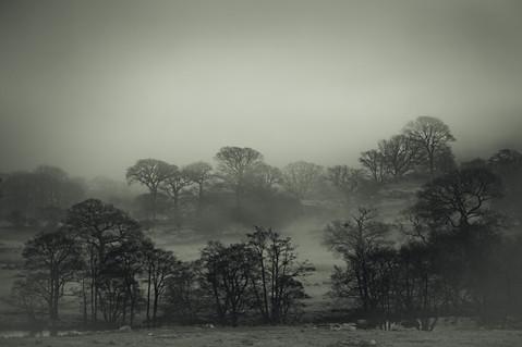 Landscapes14.jpg