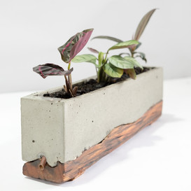 Japandi Planter. Cement and moulded wood base. Zen and Cement, Marrickvile, Australia