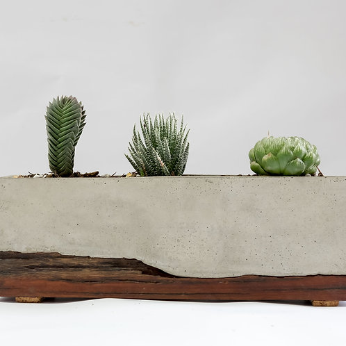 Indoor Planter with moulded wood base