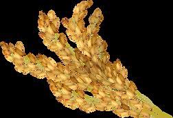 Nine Oat One Granola