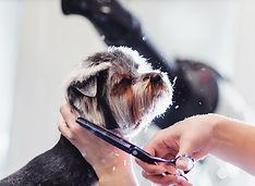 Dog-Grooming.jpg