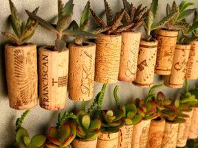 cork-garden.jpg
