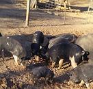 Rhodes Farm