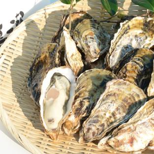 鳴瀬牡蠣 ひと粒牡蠣