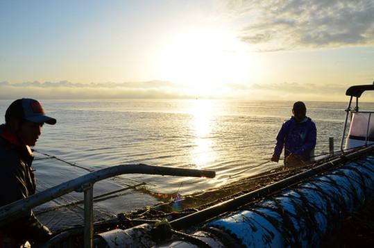 海苔摘みの風景