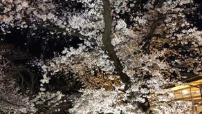 苦楽園と桜