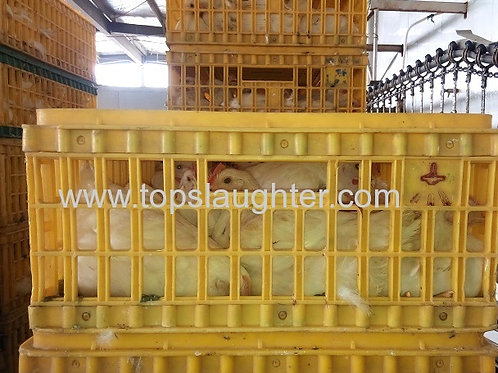 Poultry Equipment Chicken Crate